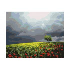 Poppy Field - malen nach zahlen - 40 x 50 cm