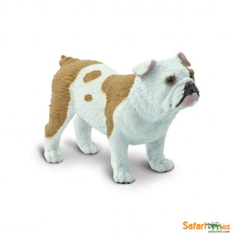 Safari 250729 Bulldog