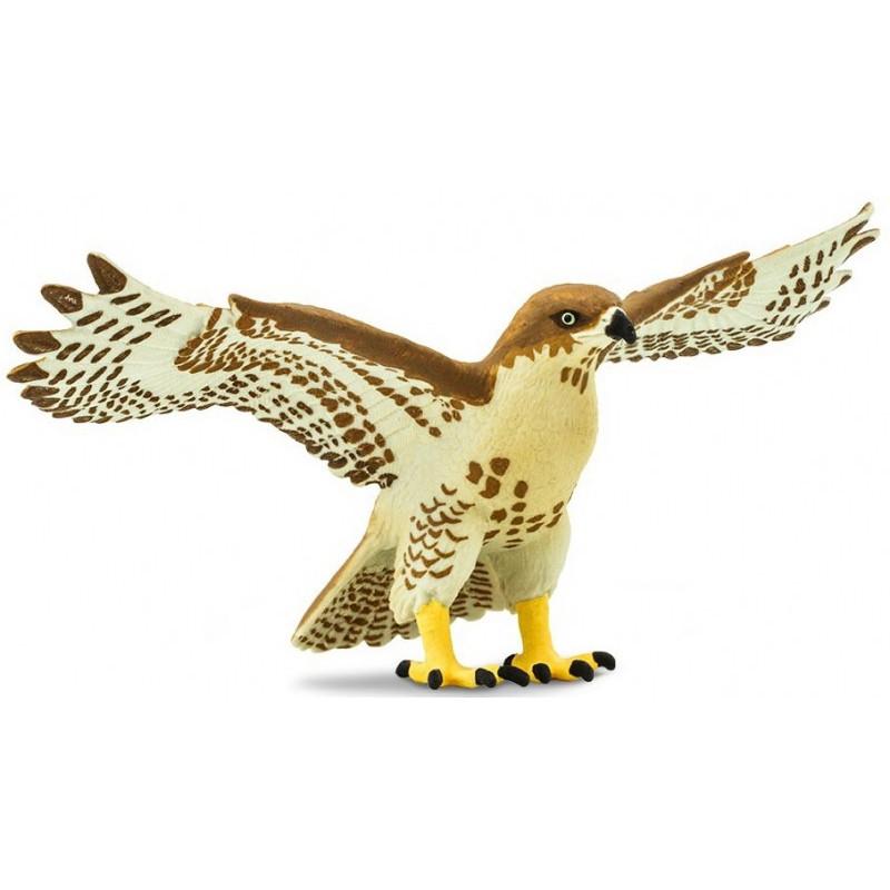 Safari 151029 Roodstaartbuizerd