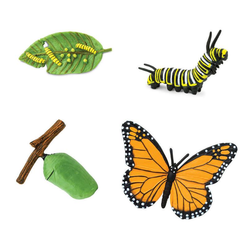 Safari 622616 Levenscyclus van de vlinder