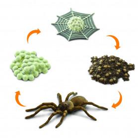 Safari 100406 Lebenszyklus Spinne