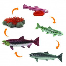 Safari 100267 Lebenszyklus Lachs