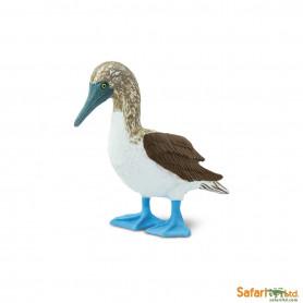 Safari 150529 Blaufußtölpel