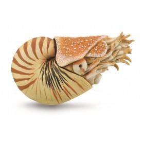 Collecta 88907 Nautilus Pompilius