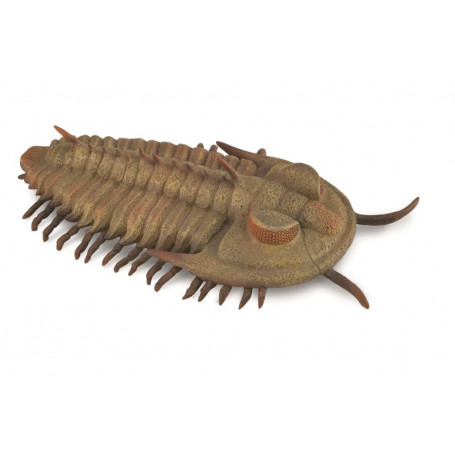 Collecta 88906 Redlichia Rex Trilobite