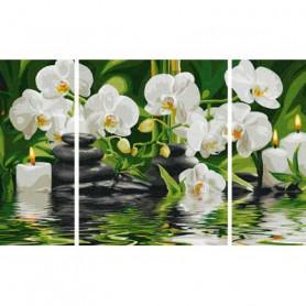 Witte Orchideeën